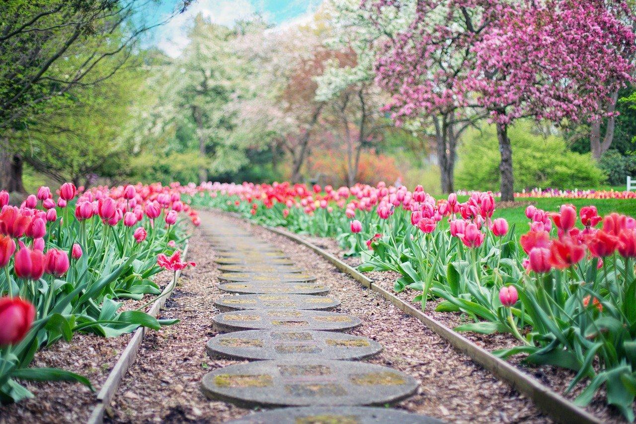 garden 1601975359